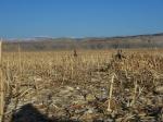 Waterfowl Hunting in Jensen Utah