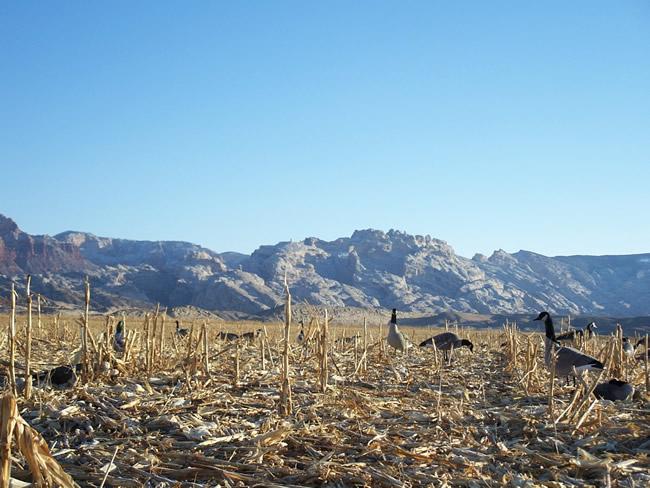 Waterfowl Youth Hunting - Escalante Ranch Utah