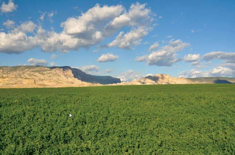 Escalante Ranch Allfalfa Field