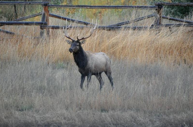 Escalante Ranch Elk Hunting