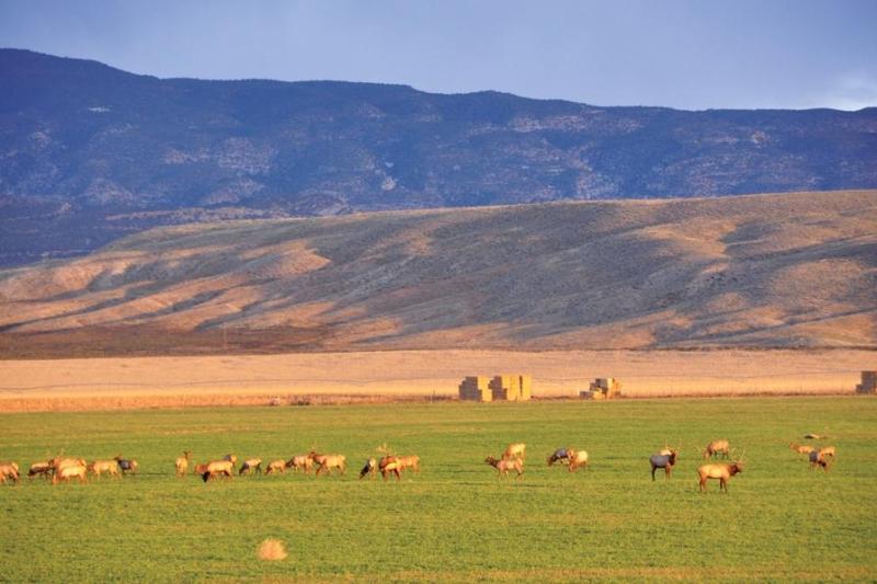 Escalante Ranch Elk Pasture