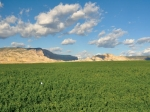 Escalante Ranch Allfalfa Field