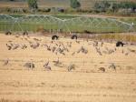 Escalante Ranch Birds