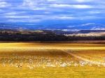 Escalante Ranch Cranes
