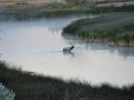 Escalante Ranch Elk in River