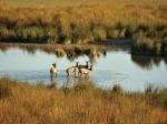 Escalante Ranch Deer